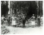Hoover and the Giant Sequoia by George Fox University Archives