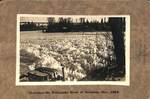Christmas on the Willamette River by George Fox University Archives