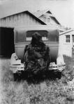 Bruin Pelt - Senior Sneak, 1932