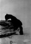 Bruin Pelt - Senior Sneak, 1932 #2 by George Fox University