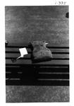 Bruin Jr. III by George Fox University Archives