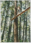 Person on Ropes Course at Camp Tilikum by George Fox University Archives